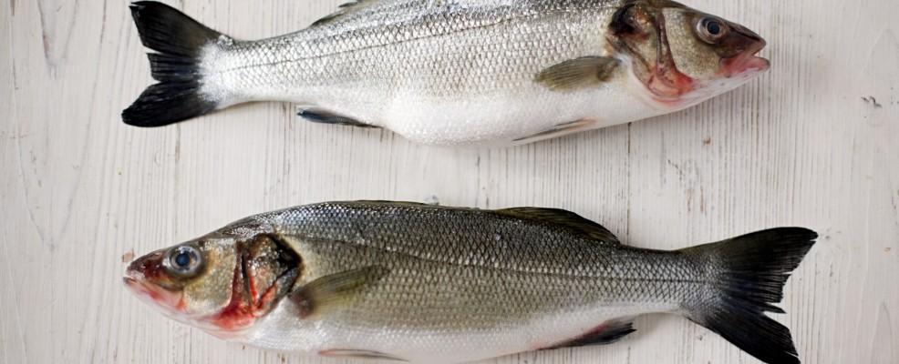 Come identificare i pesci di acqua dolce sale pepe for Pesci acqua dolce commestibili