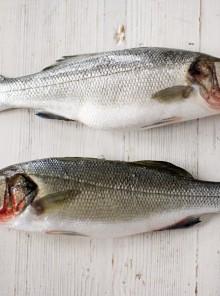 Come riconoscere i pesci di acqua dolce