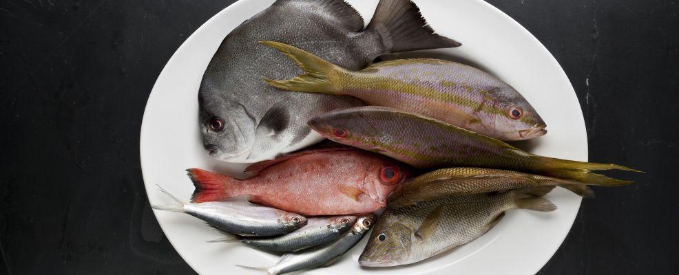 varietà di pesce