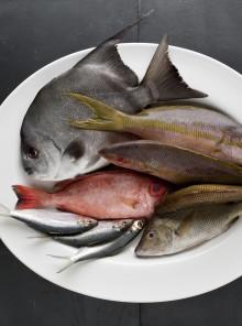 Come riconoscere i pesci di acqua salata