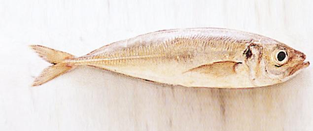 pesce aringa Sale&Pepe