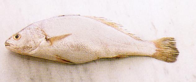 pesce ombrina Sale&Pepe