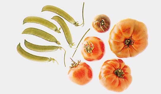 Tipi di verdure dalla a alla z