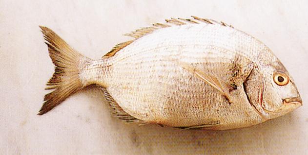 pesce sarago Sale&Pepe