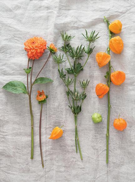 bouquet_noci_dalie_02