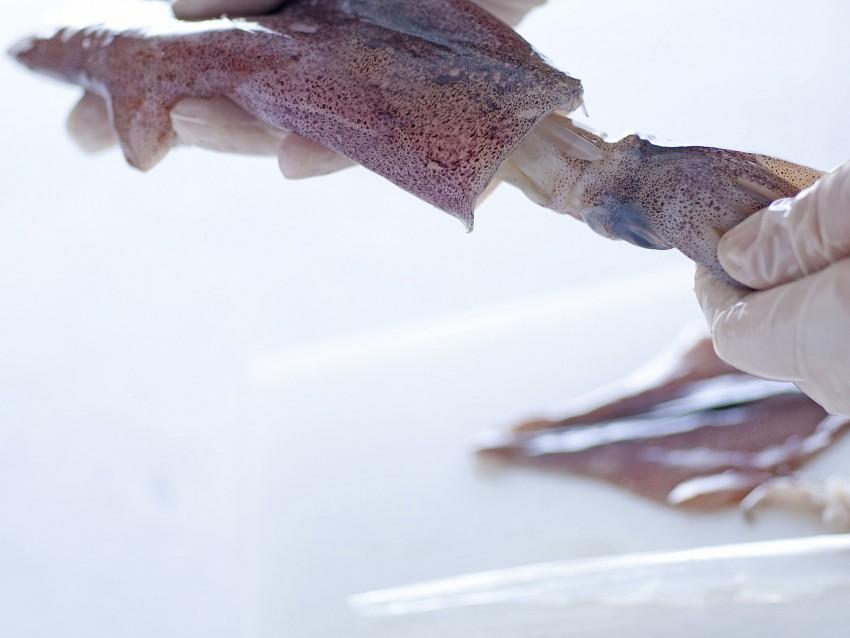 calamari-alla-romana ricetta