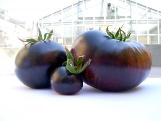 sunblack pomodoro nero