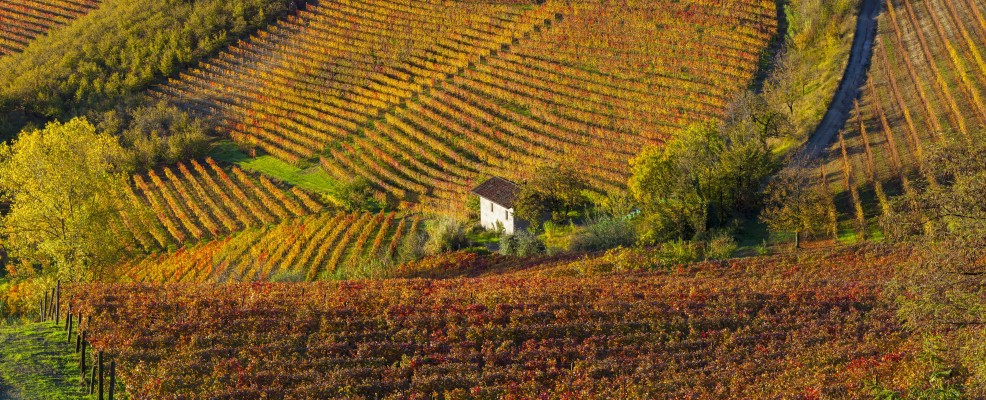 Vigneti, Alba (Foto © Peter Adams /JAI /Corbis)