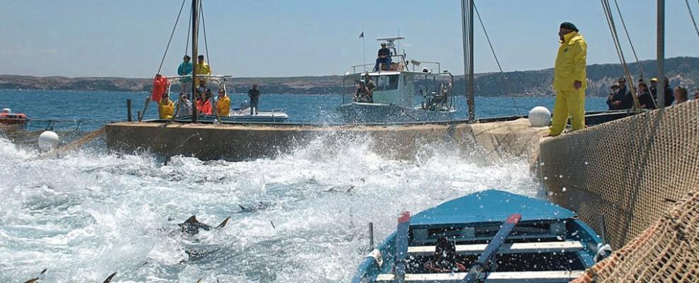 Un momento della mattanza, quando i tonni vengono alzati con le reti a filo d'acqua e catturati (Foto Flickr)
