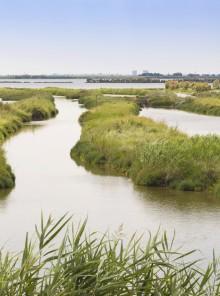 Quel ramo del delta del Po: l'area veneta