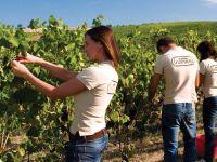 ferrarini-vino-vigne