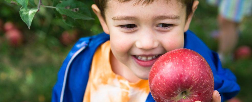 Un bambino raccoglie una mela nei parchi