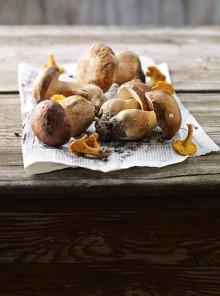 Funghi d'Appennino, sulle tracce di porcini & Co.