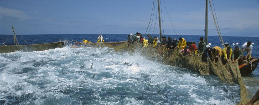 La pesca dei tonni