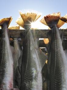 Lutefisk norvegese, il re delle tavole di fine anno