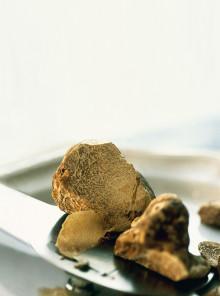 Tartufo di Acqualagna, fungo nobile marchigiano