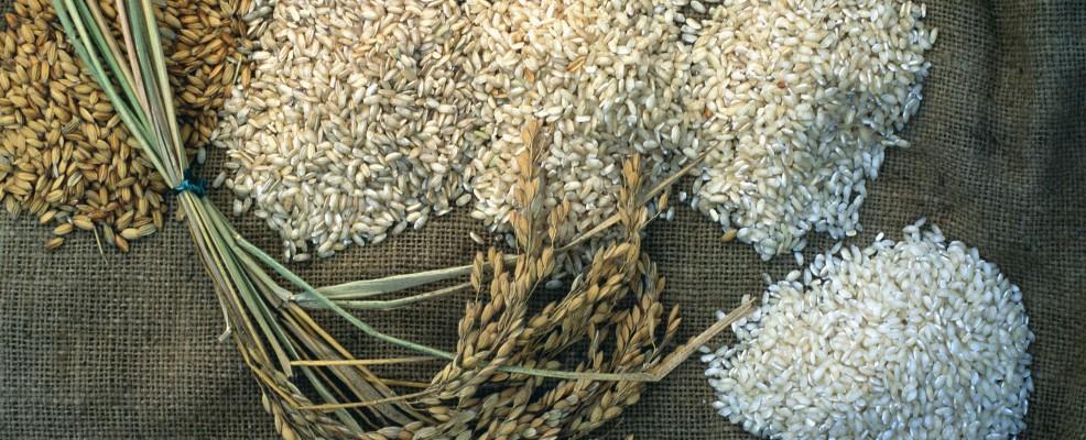 Riso coltivato nella Tenuta Castello, Vercelli (Foto © Atlantide Phototravel /Corbis)