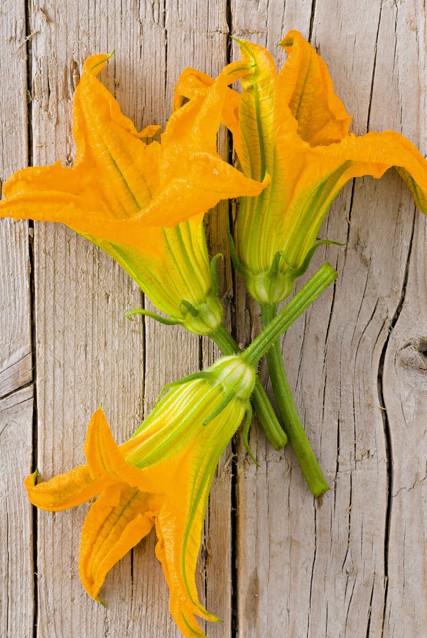 fiori di zucca Sale&Pepe