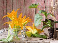 fiori di zucca Sale&Pepe ricetta