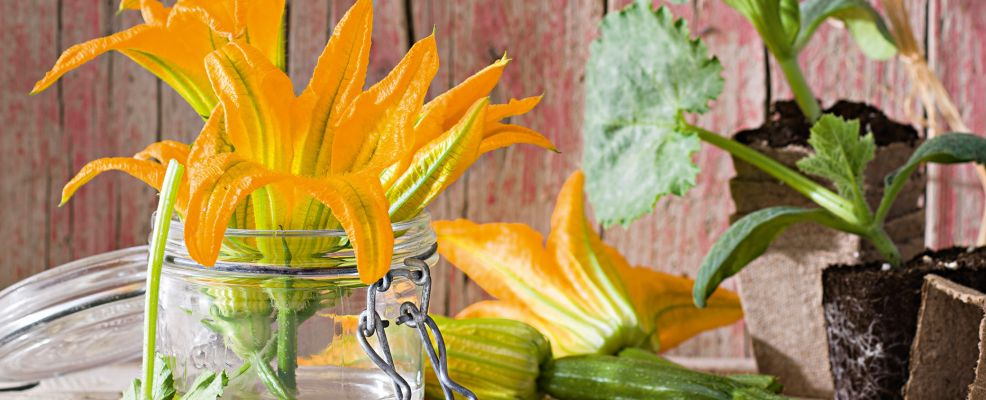 Fiori di zucca sale pepe for Cucinare zucchine trombetta