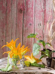 Come scegliere e preparare i fiori di zucca