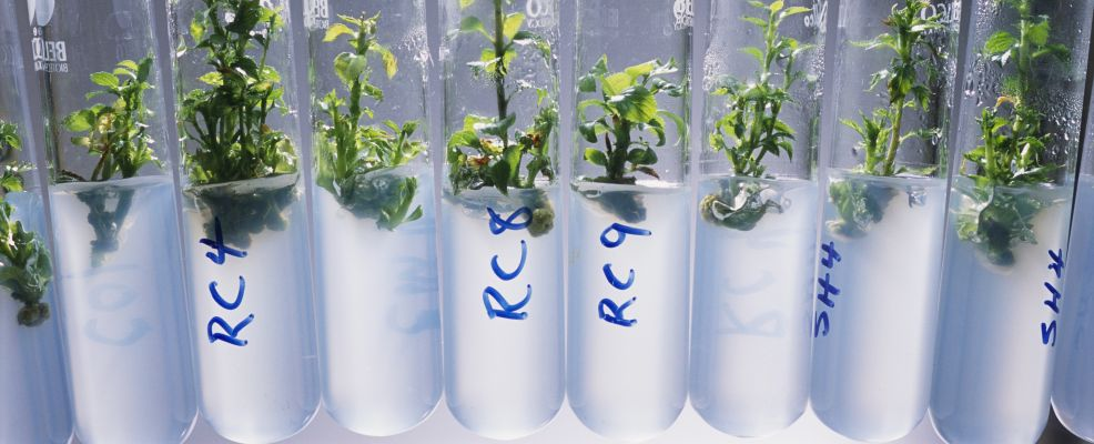 Growing Genetically Modified Plants