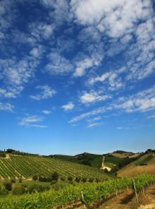 Andar per cantine, le guide ai vini italiani