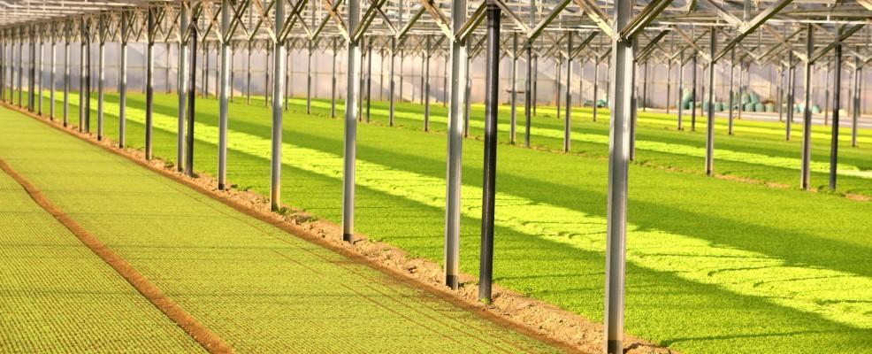 Azienda Agricola OrtoRomi