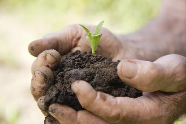 Man Holding Seedling and Soil