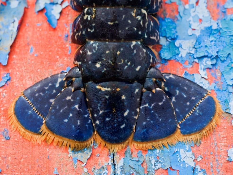 4) Olio di astice blu bretone