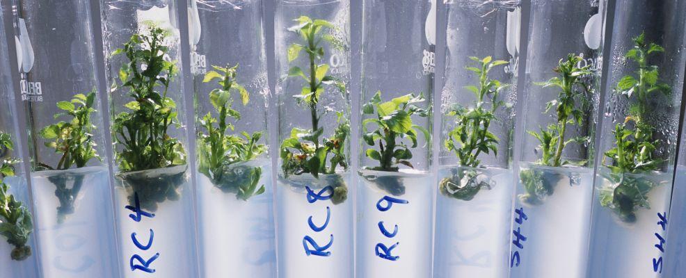 Growing Genetically Modified Plants