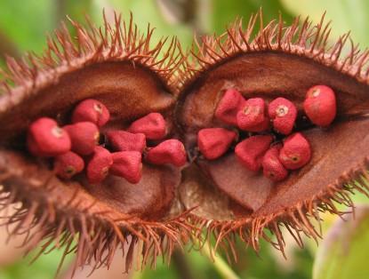 erbe-aromi-spezie