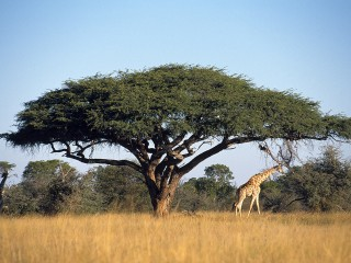 Parco nazionale Hwange, riserva dello Zimbabwe