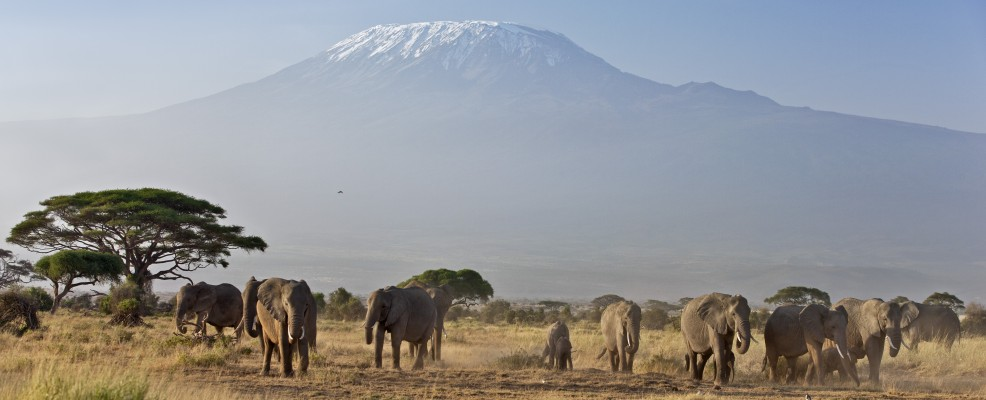 Sullo sfondo il monte Kilimanjaro, in Africa