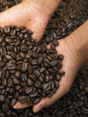 Coffee (Coffea arabica) roasted beans in Coffee Producers Association, Intag Valley, northwest Ecuador