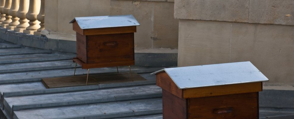 France, Paris, beehives on the roof of the Grand Palais