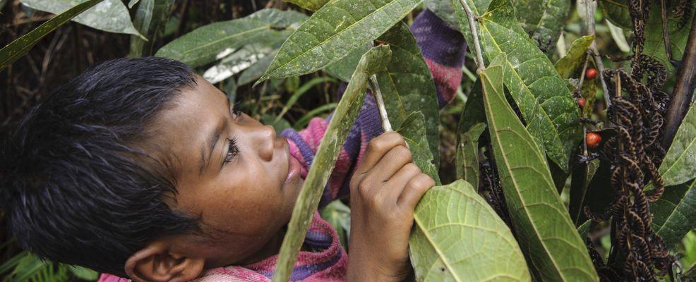 Manobo child picking wild berries to eat