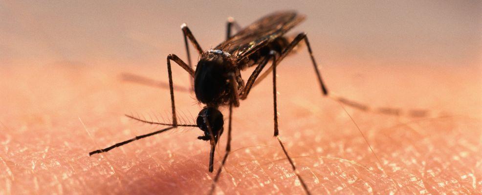 Female Mosquito Feeding on Human