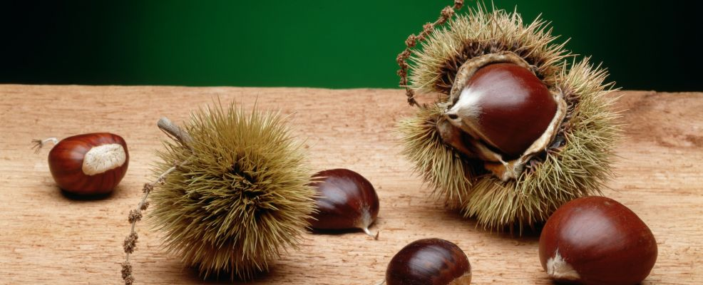 Chestnuts With and Without Husks