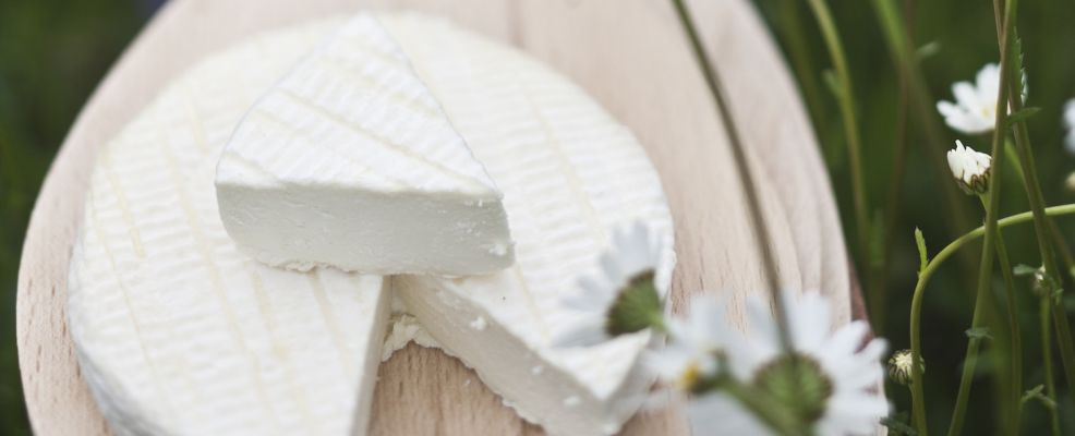France, Aveyron, Curieres, cheese, L'Ecir en Aubrac, handcrafted cheeses made from raw milk