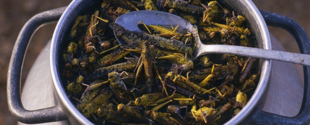 Preparing Salted African Locusts