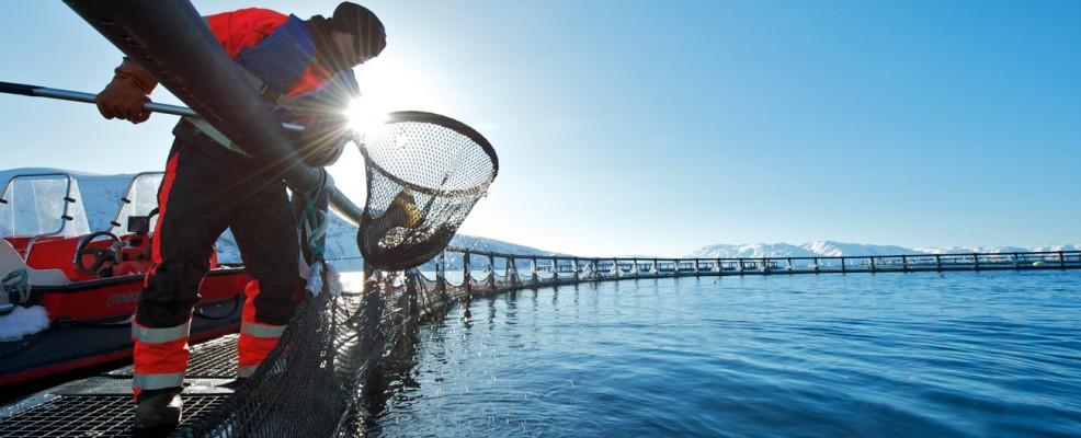 Norvegia, allevamenti di salmone