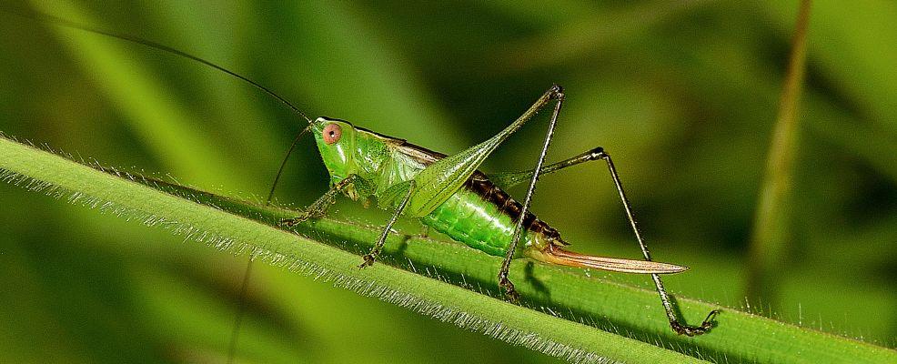 insetti-cibo-futuro