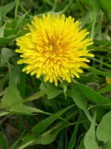 Ecco le erbe del detox di primavera