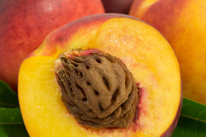 Nocciolo Di Avocado In Acqua come piantare i noccioli della frutta - sale&pepe