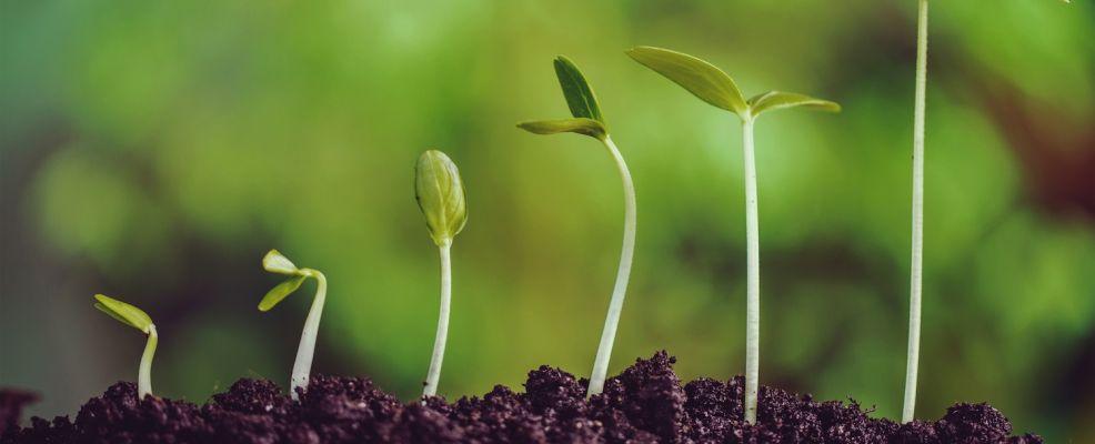 semi della frutta