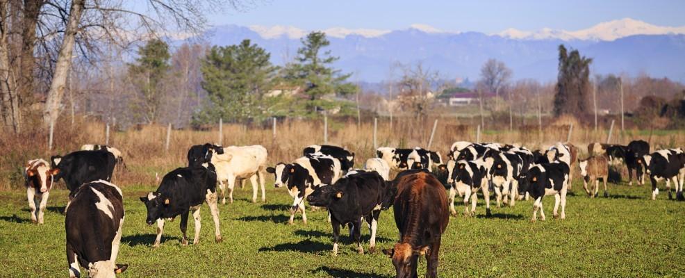 7Q4C4289-crop-986-400-986-400