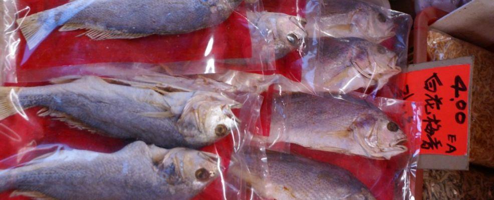 plastic_fish