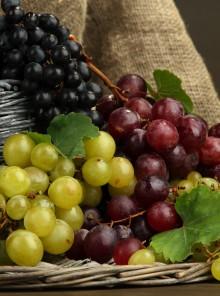 Uva, orientarsi tra le varietà