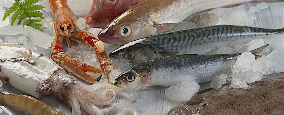 25987567 - fresh catch of fish and other seafood